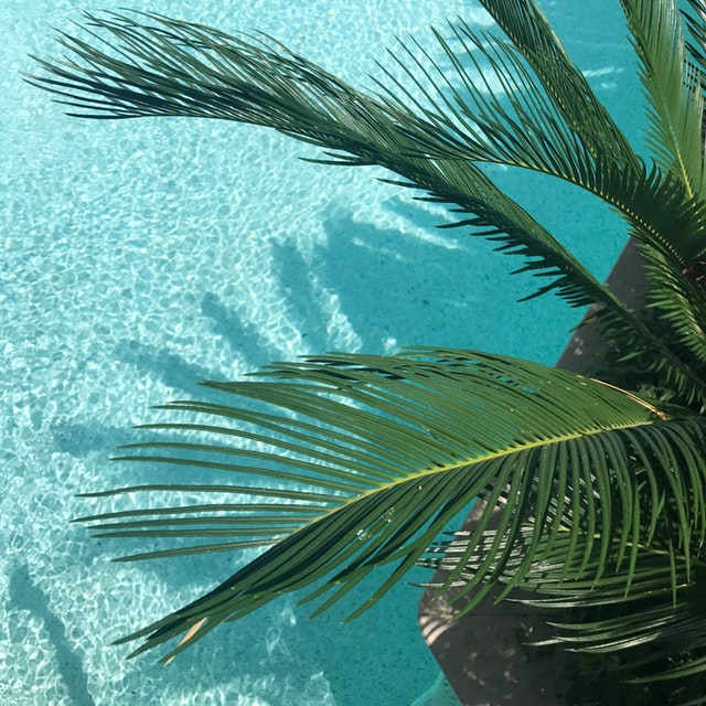 rastlina pri bazéne